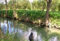 acque destinate alla vita dei pesci